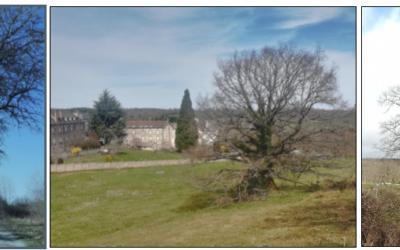 Gestion durable des arbres, arbustes et haies à Loubeyrat : restitution d'un projet tutoré