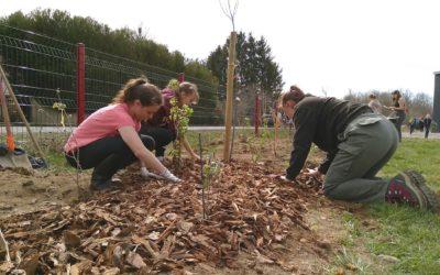 11 arbres, 130 arbustes, 200 herbacées, 50 écoliers, 30 lycéens et….