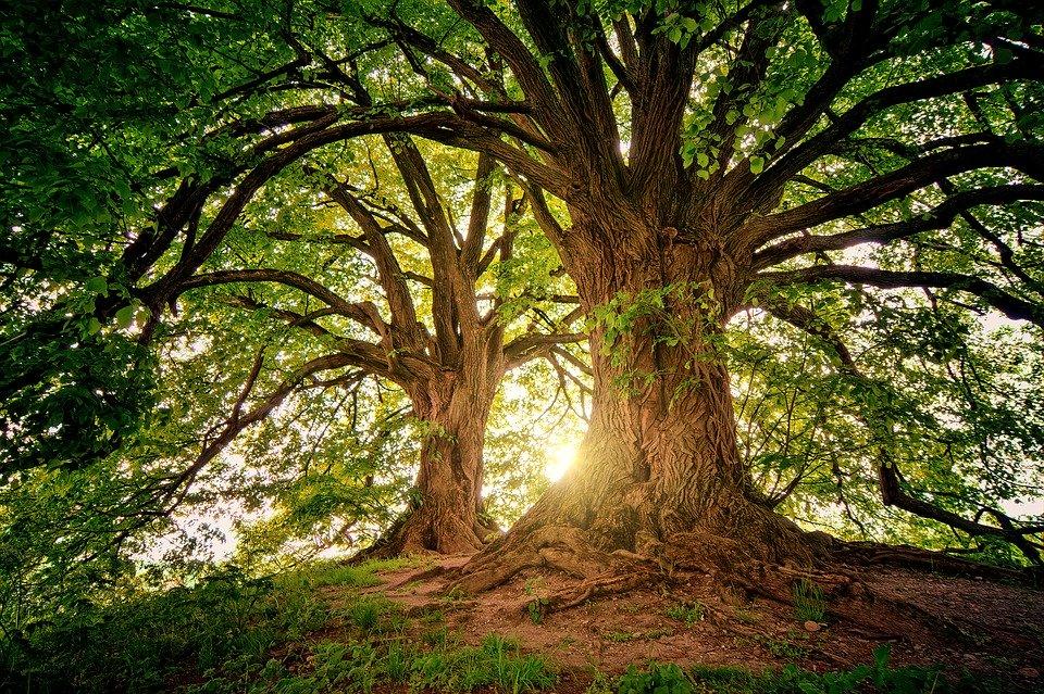 Lancement d'un concours de nouvelles utopiques : «l'arbre au futur»