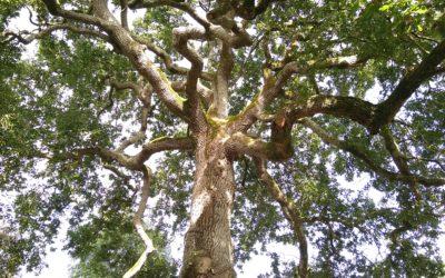 Palmarès du concours de nouvelles «l'arbre au futur»